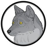 Hoofd van wolf Stock Afbeelding