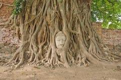 Hoofd van zandsteen Boedha in de wortels van de bodhiboom Stock Afbeelding