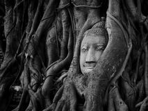 Hoofd van zandsteen Boedha in Thailand Royalty-vrije Stock Afbeeldingen