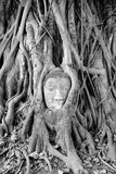 Hoofd van Zandsteen Boedha in Wat Mahatat, Ayutthaya Stock Foto's