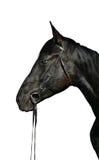 Hoofd van zwart paard met blauwe ogen Royalty-vrije Stock Foto's
