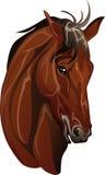 Hoofd volbloed- paardras vector illustratie