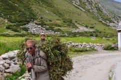 Hoofdartikel: 22 Augustus 2011: Chitkul, Sangla, Himachal, India: Niet geïdentificeerd lokaal mensen dragend voedsel voor vee Royalty-vrije Stock Afbeelding