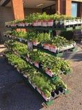 HOOFDARTIKEL: De vlakten van diverse tuinkruiden voor verkoop in Illinois bewerken en tuinieren detailhandelaar stock foto