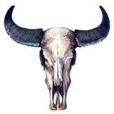 Hoofddieschedel van stier op witte achtergrond wordt geïsoleerd royalty-vrije illustratie