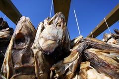 Hoofden I, Lofoten van vissen stock foto's