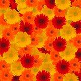 Hoofden van gerberabloemen Royalty-vrije Stock Foto