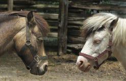 Hoofden van twee paarden royalty-vrije stock foto's