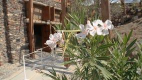 Hoofdingang aan opgegraven Akrotiri-regeling, installatie die dichtbij ingang bloeien stock video