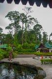 Hoofdingang van voorgestelde het Revalidatiecentrum van Orang-oetanutan Sandakan Sabah Malaysia Stock Afbeeldingen