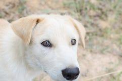 Hoofdschot van een jonge gemengde rassenhond Royalty-vrije Stock Foto's