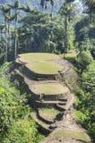 Hoofdterrassen van de oude archeologische plaats van Ciudad Perdida stock afbeelding