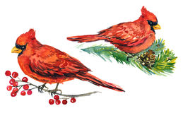 Hoofdvogels op takken met bevroren bessen en pijnboom met kegels Royalty-vrije Stock Fotografie