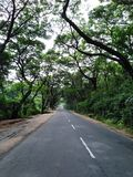 Hoofdweg tussen bos schaduwrijke weg stock fotografie