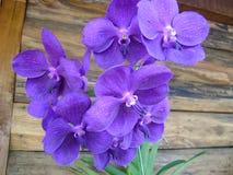 Hoofdzakelijk violette orchideeën royalty-vrije stock fotografie