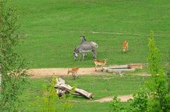 Hoofed Mammals Stock Image