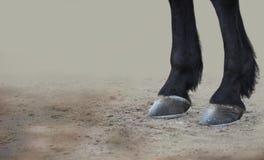 Hoofs de cheval Photos stock