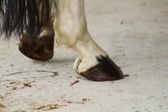 Hoofs de derrière de cheval de repos qui sont graissés image libre de droits