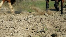 Hoofs of horse running on the sand. Close up of legs of stallions herd  galloping on the dry muddy ground. Horse legs in grey dust