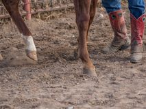 Hoofs i buty obrazy royalty free