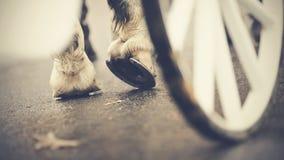 Hoofs posteriori con i ferri di cavallo di un cavallo sfruttato, dietro una ruota del trasporto Immagini Stock Libere da Diritti