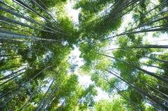 Hoog bamboe Royalty-vrije Stock Foto's