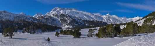 Hoog bergpanorama in de winter met sneeuw, pijnboombomen en blauwe hemel stock afbeeldingen