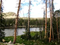 Hoog die Bergmeer door Lodgepole Pine Bomen wordt omringd stock fotografie
