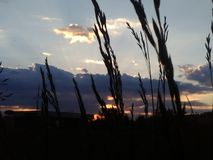 Hoog gras die op zonreeks wachten stock foto's