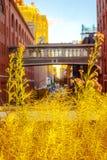 Hoog Lijn Openbaar Park in de Stad van New York Stock Afbeeldingen