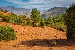 Hoog plateau in de Atlasbergen, Marokko stock afbeeldingen