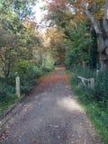 Hoog soeren l'autunno Immagini Stock