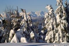Hoog Tatra - Slowakije Stock Foto's