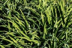 Hoog - textuur van kwaliteits de groene bladeren royalty-vrije stock foto's