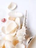 Hoog zeer belangrijk stilleven van shells Royalty-vrije Stock Fotografie
