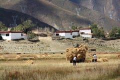 Hooglandlandbouwers die op de gebieden werken Stock Afbeeldingen