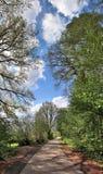 Hoogst gedetailleerd natuurlijk boslandschap in een hoge die resolutiepanorama in noordelijk Europa wordt gezien stock afbeelding