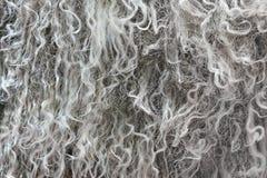 Hoogst gedetailleerde textuur als achtergrond van grijs die bont van synthetisch dierlijk lang golvend en krullend haar wordt gem royalty-vrije stock foto's