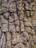 Hoogst gedetailleerde textuur van de schors van de berkboom stock afbeeldingen