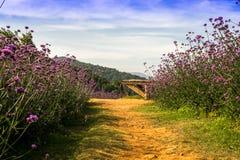 Hoogste berg de pas met bloem Royalty-vrije Stock Afbeeldingen
