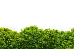 Hoogste boomachtergrond Royalty-vrije Stock Afbeeldingen
