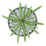 Hoogste die mening van cactusinstallatie in pot op wit wordt geïsoleerd Royalty-vrije Stock Afbeeldingen