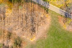 Hoogste die mening van stadspark met goud gevallen bladeren wordt behandeld royalty-vrije stock foto's