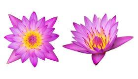 Hoogste en zijaanzicht purpere die lotusbloem op witte achtergrond wordt geïsoleerd met stock foto's