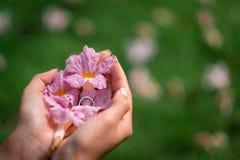 Hoogste mening die over vrouwen` s handen roze bloem houden Stock Foto's