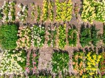 Hoogste mening die van bloemen op het gebied op plattelandsgebied groeien Stock Foto's