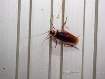 Hoogste mening een dode kakkerlak op witte achtergrond royalty-vrije stock afbeeldingen