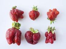 Hoogste mening Reeks aardbeien op witte achtergrond wordt geïsoleerd die Aardbeien van niet genormaliseerde vorm op a op witte ac Royalty-vrije Stock Foto's