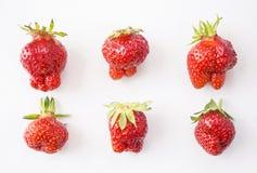 Hoogste mening Reeks aardbeien op witte achtergrond wordt geïsoleerd die Aardbeien van niet genormaliseerde vorm op a op witte ac Stock Afbeeldingen