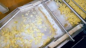 Hoogste mening van aardappelstukken die zich in schuimende vloeistof langs de vervoerder bewegen stock footage